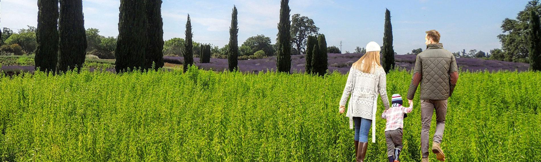 Tour The Lavender Fields